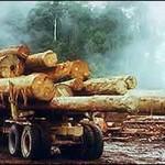 Afaceri cu lemn