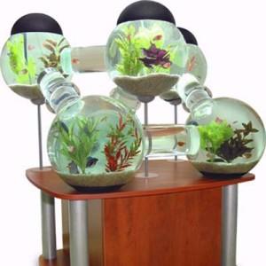 acvarii