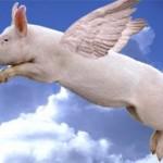 afaceri cu porci