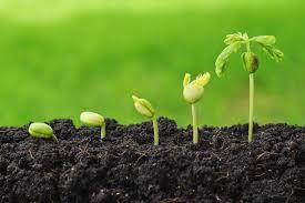 culturi agricole profitabile