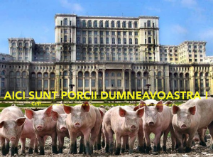 porcii-parlament